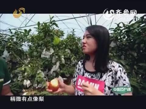 20160209《中国原产递》:莲雾