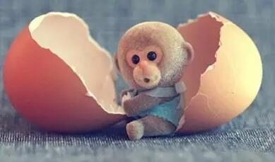 猴宝宝扎堆生该如何应对