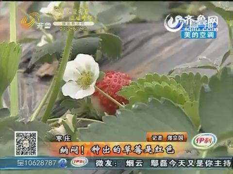 枣庄:纳闷!种出的草莓是红色