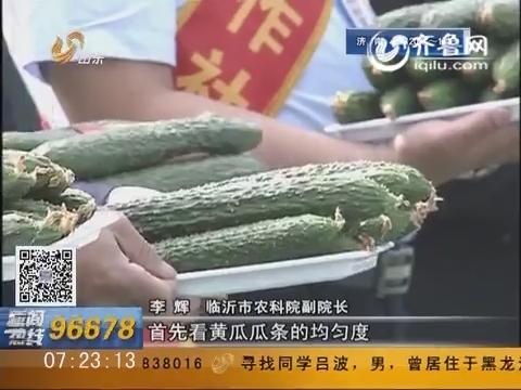 """临沂兰陵:好看、好吃又安全 """"拳头型""""水果黄瓜擂台赛拔头筹"""