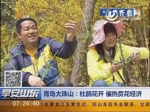 青岛大珠山:杜鹃花开 催热赏花经济