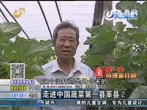 走进中国蔬菜第一县莘县②