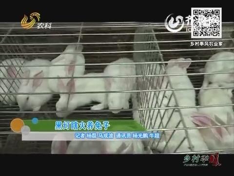 黑灯瞎火养兔子