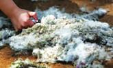 莱芜:烟头引燃杨絮酿大祸 几十亩树林被烧毁