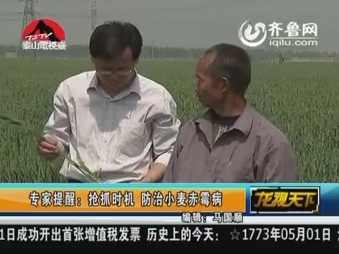 专家提醒:抢抓时机 防治小麦赤霉病