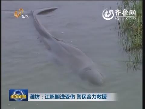 潍坊:江豚搁浅受伤  警民合力救援