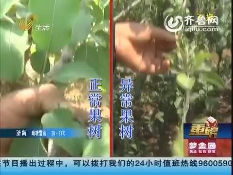 【重磅】淄博:2000多棵苹果树濒临死亡?