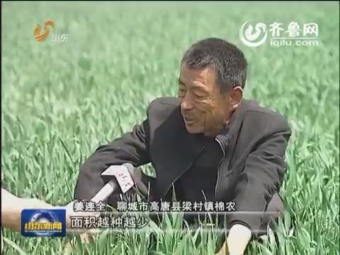 【记者调查】棉农老姜的困惑(上)