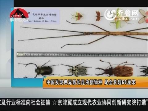 图片新闻:中国发现世界最长昆虫新物种 足全长超60厘米