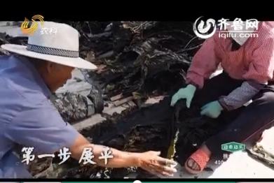 20160626《中国原产递》:大钦岛海带