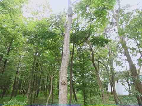 日照海滨国家森林公园宣传片