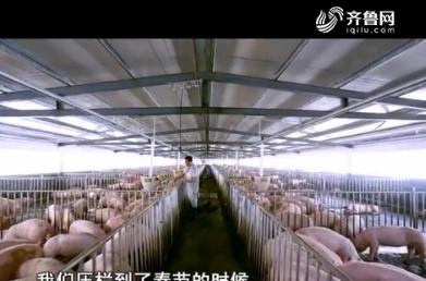 迎新春 探猪市:年关将至 猪价稳中带涨