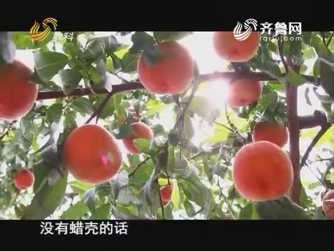 桃树春季管理——桃树病虫害防治