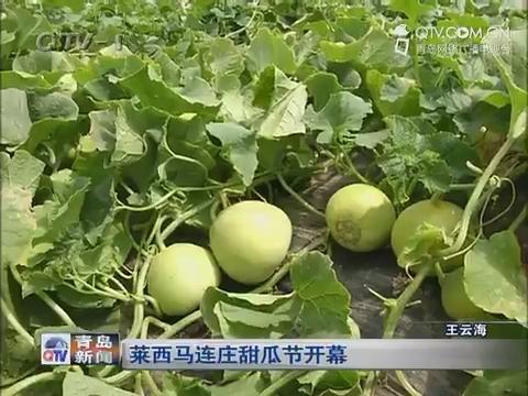 莱西马连庄甜瓜节开幕_青岛新闻_精彩点播_山东网络台