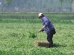 【与生命的抗战】(三)盛亦兵:山东最高的那棵劲草