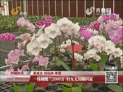 禹城 一株蝴蝶兰2000万 妇女无知顺回家