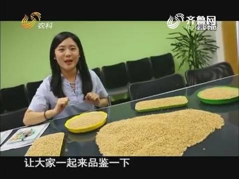 """20170818《当前农事》:品味小麦""""鉴""""证丰收"""