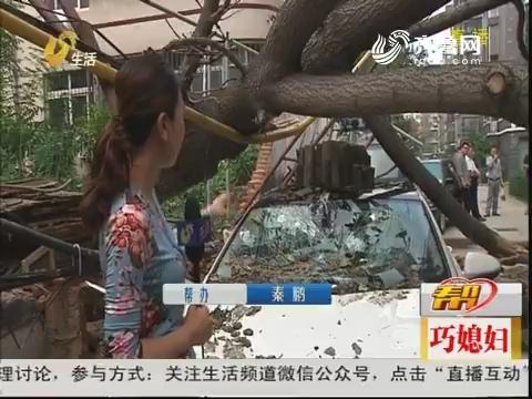 德州:树倒墙塌 砸烂汽车