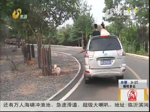 济南:看老虎逗狗熊 领略野生之美