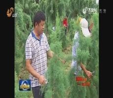 【砥砺奋进的五年】东营:从一棵树到绿满城