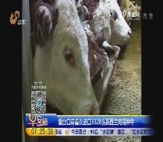 烟台口岸首次进口3328头新西兰肉用种牛