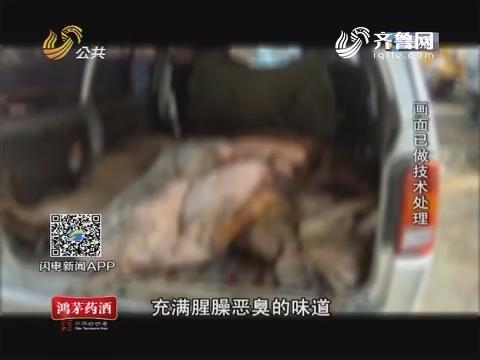 临沂:面包车内深藏10头病死猪