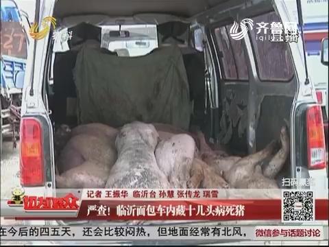 严查!临沂面包车内藏十几头病死猪