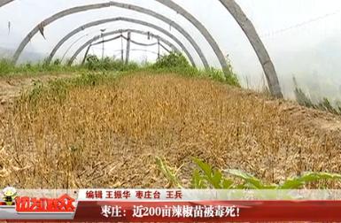 枣庄:近200亩辣椒苗被毒死!