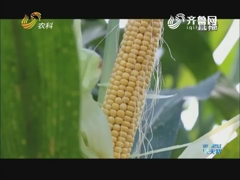 山东农业新动能:鲁西南平原上的生态牧场