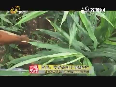 """20170829《品牌农资龙虎榜》:昌邑——半路杀出个""""姜胖子"""""""