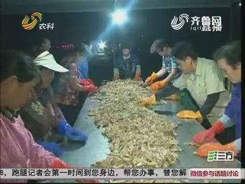 龙口:开海第一网 海鲜大餐上岸啦