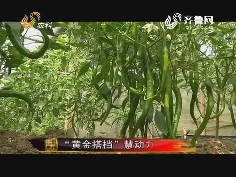 """20170905《品牌农资龙虎榜》:""""黄金搭档""""慧动力"""