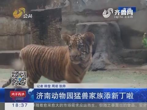 济南动物园猛兽家族添新丁啦