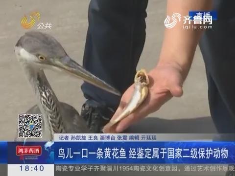 淄博:受伤大鸟落到厂区里 众人纷纷救助