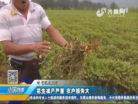济宁:花生减产严重 农户损失大