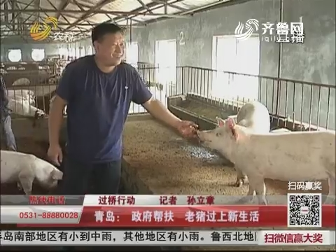 【过桥行动】青岛:政府帮扶 老猪过上新生活
