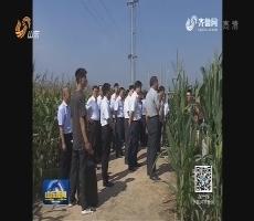 省农科院推广100项新技术