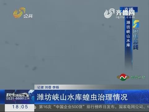 闪电连线:潍坊峡山水库蝗虫治理情况