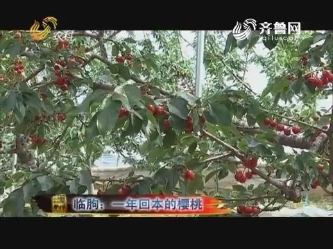 20170912《品牌农资龙虎榜》:临朐 一年回本的樱桃