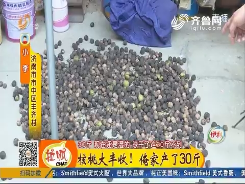 济南:核桃大丰收 俺家产了30斤