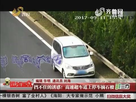 青岛:挡不住的诱惑!高速超车道上停车摘石榴