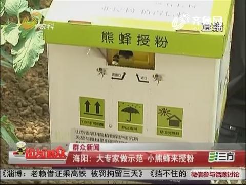 【群众新闻】海阳:大专家做示范 小熊蜂来授粉