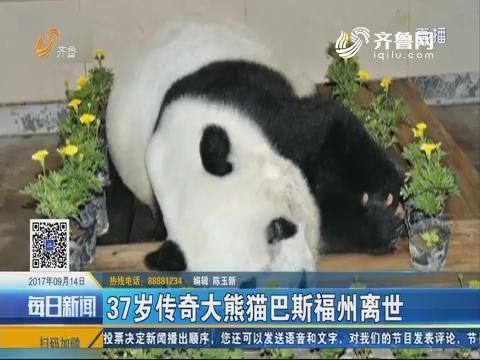 37岁传奇大熊猫巴斯福州离世