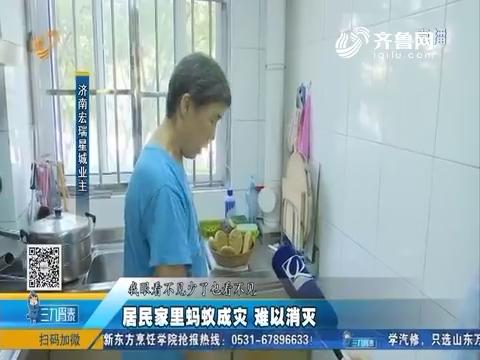 济南:居民家里蚂蚁成灾 难以消灭