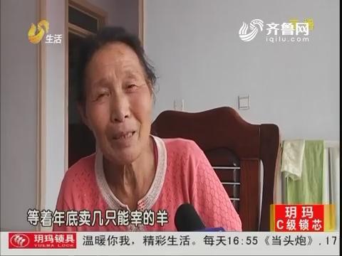 """潍坊:昔日""""木头人"""" 如今成了羊""""保姆"""""""