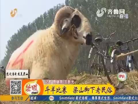 斗羊比赛 梁山脚下老民俗