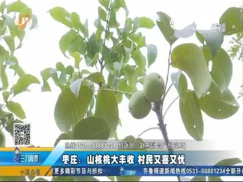 枣庄:山核桃大丰收 村民又喜又忧