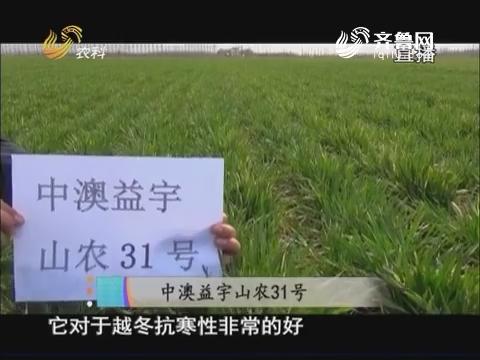 20170928《当前农事》:中澳益宇山农31号