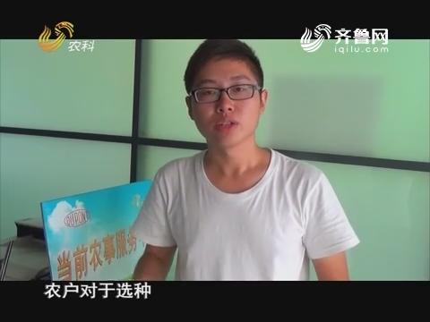 20170930《当前农事》:中澳益宇山农31号