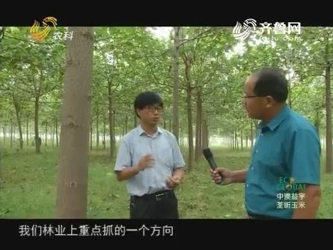20170930《农科直播间》:2017山东科技扶贫 木材战略——四倍体泡桐应运而生